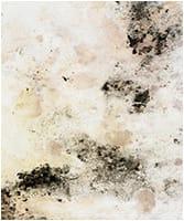 Mold (Biotoxin Illness – CIRS)